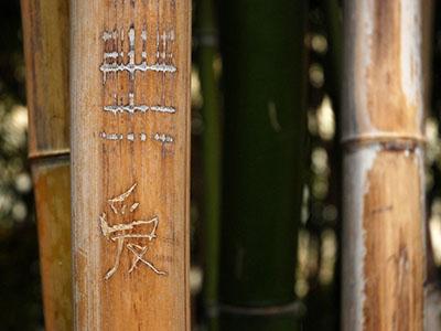 Bambus-Köln Semiarundinaria